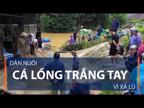 Dân nuôi cá lồng trắng tay vì xả lũ | VTC1 - Thời lượng: 3 phút, 3 giây.