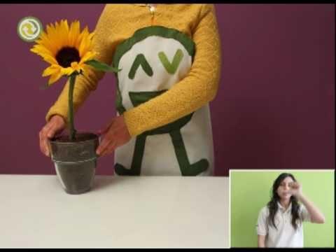 Fundación Que Transforma - Que plantar en primavera