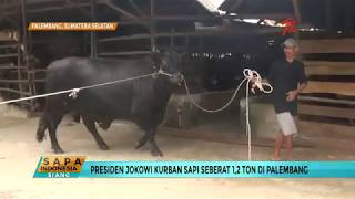 Video Jokowi Kurban Sapi Seberat 1,2 Ton MP3, 3GP, MP4, WEBM, AVI, FLV Agustus 2019