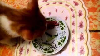 Кот любит огурцы больше колбасы.