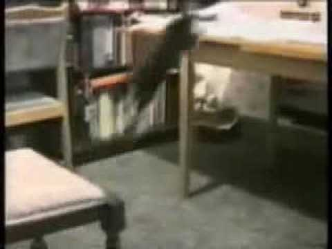 Probably the Funniest Cat Video You\'ll Ever See