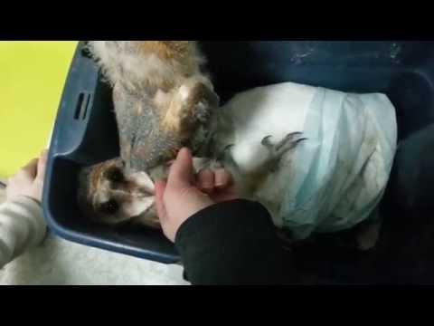 Двух сипушат принесли на осмотр к ветеринару