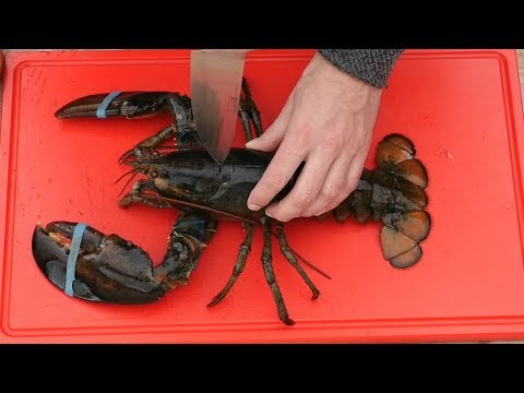 GRAPHIC - Live Lobster  - 2 Grilled Lobster Recipes