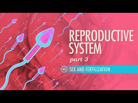 Reproductive System, Part 3 - Sex & Fertilization: Crash Course A&P #42