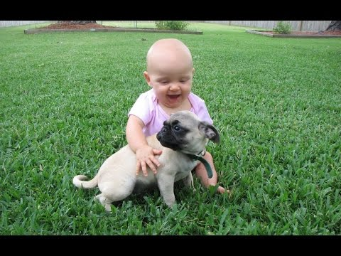 Funny Pug and Baby Video Compilation 2015 [NEW HD]