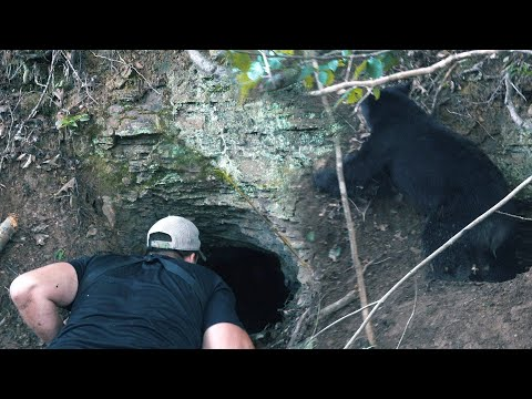 BLACK BEAR HUNTING WITH HOUNDS - The Untamed