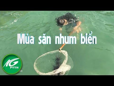 Mùa săn nhum biển | THKG - Thời lượng: 10:11.