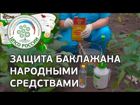Борьба с вредителями народными средствами. Выращивание баклажанов.