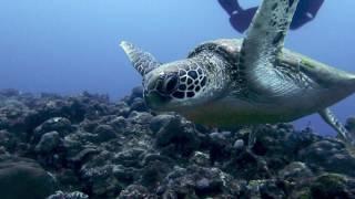 Aloha Divers Okinawa - Venha conhecer nosso trabalho !!!