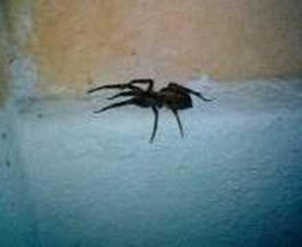 ragno - Una Bella Sorpresa Davanti A Casa Dei Nonni! Un Ragno Grande Come Una Noce...