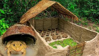 Video How To Build Bullfrog Hut And Feeding Giant Frogs In Coconut Shell MP3, 3GP, MP4, WEBM, AVI, FLV November 2018