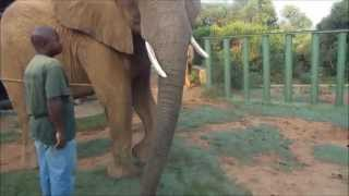 Living With Big Cats- South Africa 2014