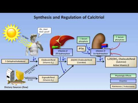 calcium - A review of normal calcium and phosphate homeostasis, including discussion of vitamin D metabolism and the actions of PTH, as well as brief mention of the ne...