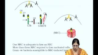 Mod-07 Lec-13 The Three Complement Pathways