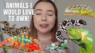 Animals That I Would LOVE To Own! | Pets I Want! by Emma Lynne Sampson