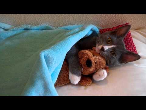 Lindo gatito abraza a su osito de peluche