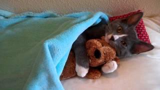 Кот Миша и его медвежонок