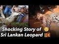 කොටියාගේ කතාව 😱 - Sri Lankan Leopard Shocking Story | NAWRAN | Next Harambe?