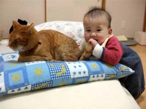 小主人一把抓住貓咪晃動的尾巴做「這個動作」後,喵星人的反應讓大家都痴痴地笑不停!