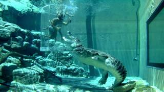 Crocosaurus Cove