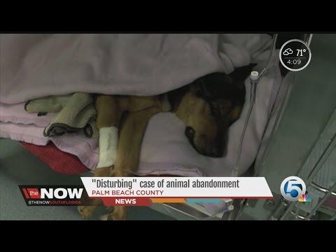 'Disturbing' case of animal abandonment