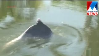 Vypin native amazing with Dolphin   Manorama News