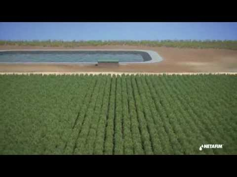 Installing subsurface drip irrigation for Sugar cane