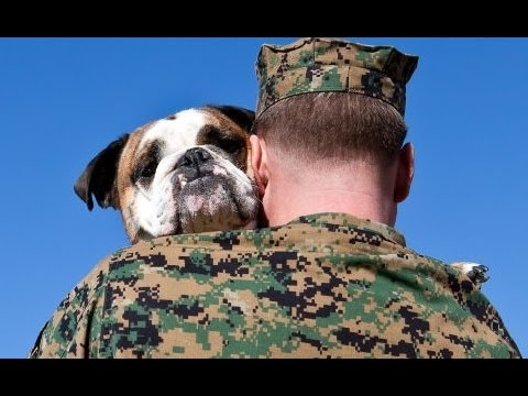Home - PART 2 | Soldiers Coming Home to Dogs | Dogs Welcome Home Soldiers | Dog Welcoming Home Soldier | Dog Welcoming Owner Home | Dog Welcoming Soldier Home | Dog...