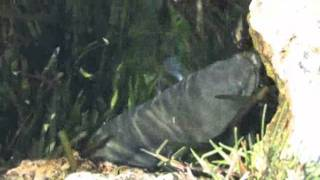 Stilbaai South Africa  city photo : Stilbaai - South Africa Travel Channel 24