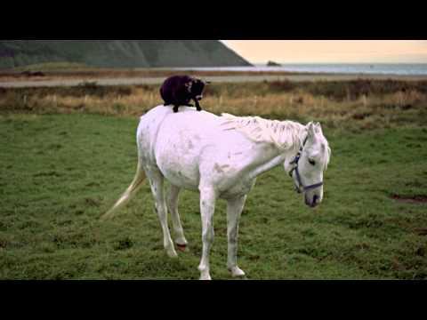 Divertido Comercial: Una cabra montando a caballo