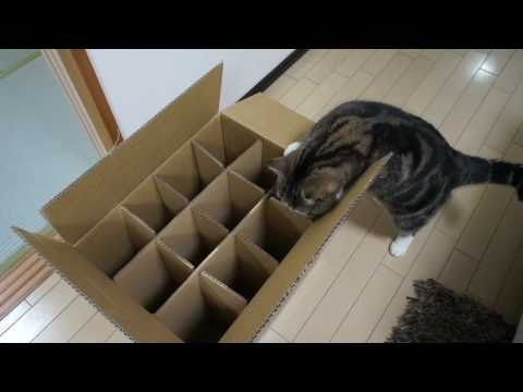Cute video cats