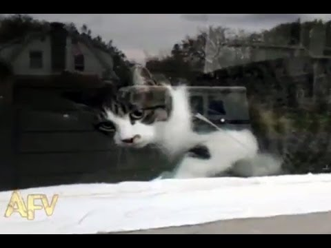VIRAL VIDEO:  Cat vs Mailman