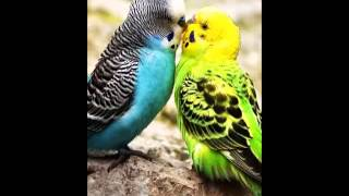 Birds HD Live Wallpaper YouTube video