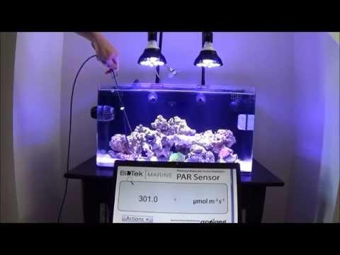 PAR38 Led Reef Bulb - Photic