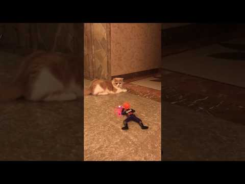 Cat Videos  Cat videos try not to laugh  Funny cat videos 2018  Cat Funny Video