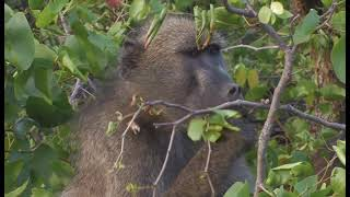 Kruger National Park South Africa  city pictures gallery : Kruger National Park Camps Disk 1 HD - South Africa Travel Channel 24