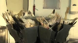 """Bruxelles forbyder foie gras: """"Det er tortur"""""""