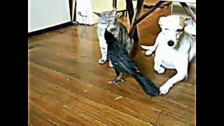 Compilation Funny Animals, The Best Of 2012