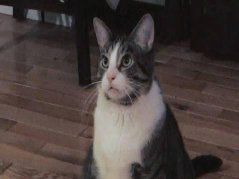 Ernesto the Flying Cat!
