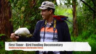 Sherbrooke Australia  city photos : First Timer-Bird Hand Feeding Short Documentary @ Dandenong Ranges Sherbrooke Forest