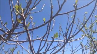 Videos de superación personal y despertar espiritual. Contemplando la naturaleza. Volver a empezar.