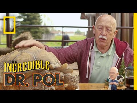 It's Time For Turtles - Season 4, Episode 7 | Coffee Break with Dr. Pol