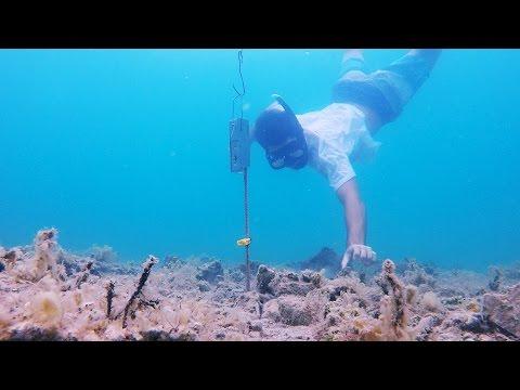 他把一個小鐵盒放在海底,1:39當他拉起來時你以後去海灘時就會三思了!