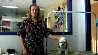 Dog Grooming : How To Groom A Shih Tzu