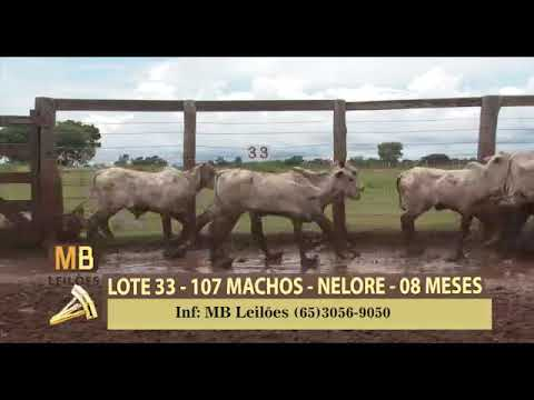 183º LEILÃO VIRTUAL MB LEILÕES