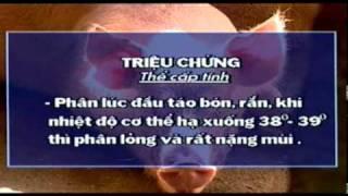 Phong va tri benh cho heo (1).avi