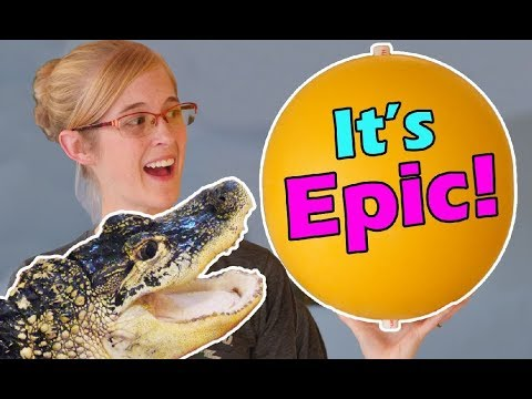 Our Alligator Gets a New Toy!