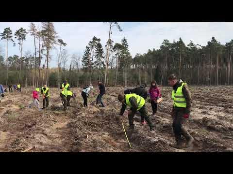 Wideo1: Gostyniacy sadzą las