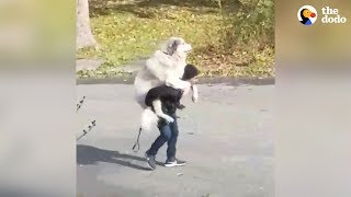 Dog Decides When His Walk Is Over | The Dodo by The Dodo