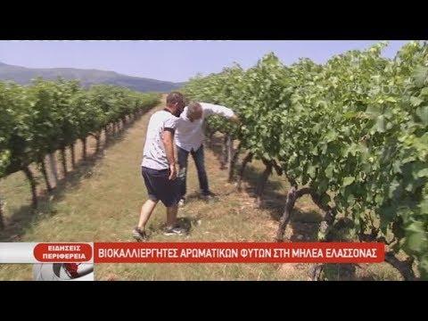 Βιοκαλλιεργητές αρωματικών φυτών στη Μηλέα Ελασσόνας| 09/07/2019 | ΕΡΤ
